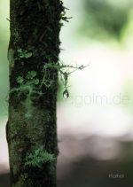nature Wasserzeichen5