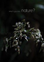 nature Wasserzeichen7